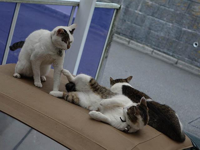 Sora, Koyuki & Hoshi, #5133