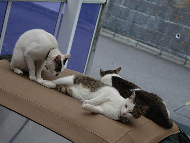 Sora, Koyuki & Hoshi, #5134