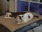 Sora & Yuki, #5544