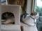 Caterina, Umi & Koumi, #5548