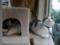 Caterina, Umi & Koumi, #5549