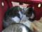 Caterina, Umi & Koumi, #2389