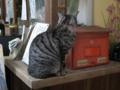梅宮大社の猫, #2450