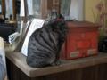 梅宮大社の猫, #2451