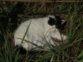 梅宮大社の猫, #2452
