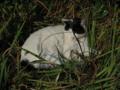梅宮大社の猫, #2454