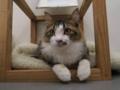 Cats of N.R.Hiroshima, #2537