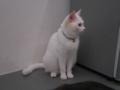 Cats of N.R.Hiroshima, #2539