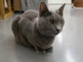 Cats of N.R.Hiroshima, #2541