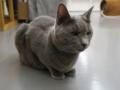 Cats of N.R.Hiroshima, #2542