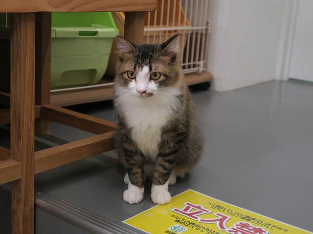Cats of N.R.Hiroshima, #2545