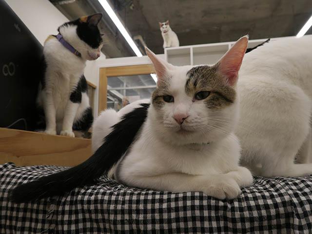 Cats of N.R.Hiroshima, #2546