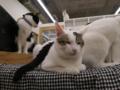 Cats of N.R.Hiroshima, #2547
