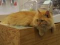 Cats of N.R.Hiroshima, #2550