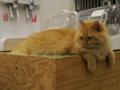 Cats of N.R.Hiroshima, #2551