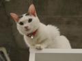 Cats of N.R.Hiroshima, #2552