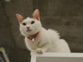 Cats of N.R.Hiroshima, #2553