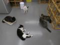 Cats of N.R.Hiroshima, #2556