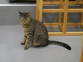 Cats of N.R.Hiroshima, #2558