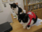Cats of N.R.Hiroshima, #2561