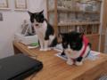 Cats of N.R.Hiroshima, #2562