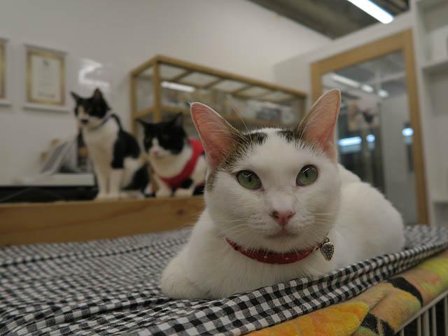 Cats of N.R.Hiroshima, #2563