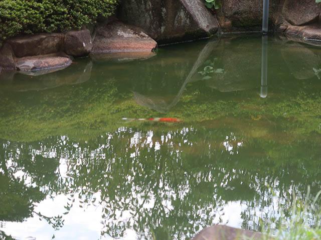 日本料理 雲海 庭園, #5