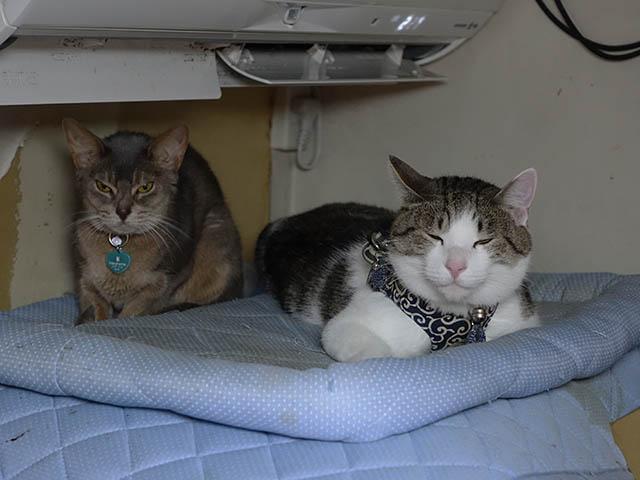 Margherita & Koumi, #6110