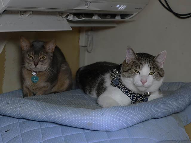 Margherita & Koumi, #6111