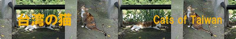 Cats of Taiwan, Title