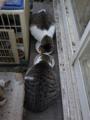 Yuki & Koyuki, #6131
