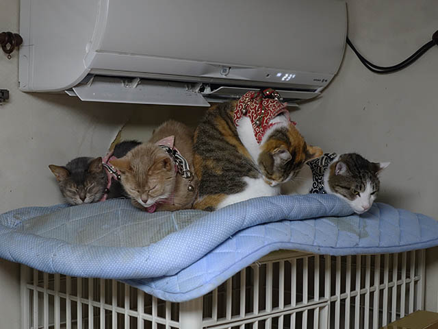 Margherita, Caterina, Hana & Koumi, #6195