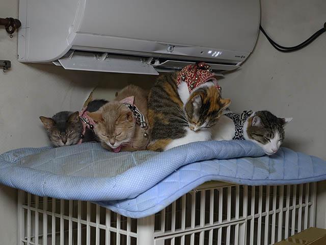 Margherita, Caterina, Hana & Koumi, #6196