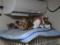 Margherita, Caterina, Hana & Koumi, #6199