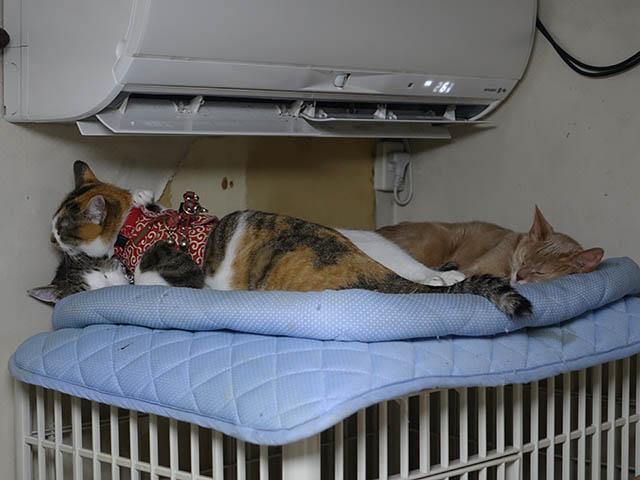 Caterina, Hana & Koumi, #6219