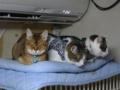 Valentina, Umi & Koumi, #6233