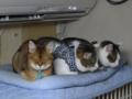 Valentina, Umi & Koumi, #6235
