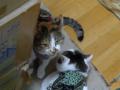 Umi & Hana, #6312