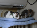 Margherita, Umi & Koumi, #6321