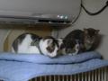 Margherita, Umi & Koumi, #6322