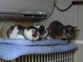 Margherita, Umi & Koumi, #6325