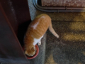 Cats of Houtong, #6414