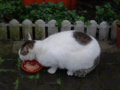 Cats of Houtong, #6417