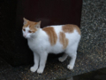 Cats of Houtong, #6436