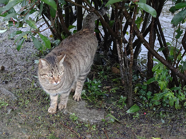 Cats of Houtong, #6439