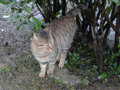Cats of Houtong, #6440