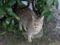 Cats of Houtong, #6444
