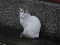 Cats of Houtong, #6447