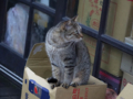 Cats of Houtong, #6460