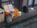 Cats of Houtong, #6463
